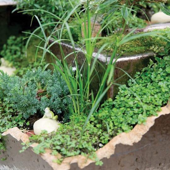 Broken Pot Fairy Garden - Nov 26 - Royal City Nursery