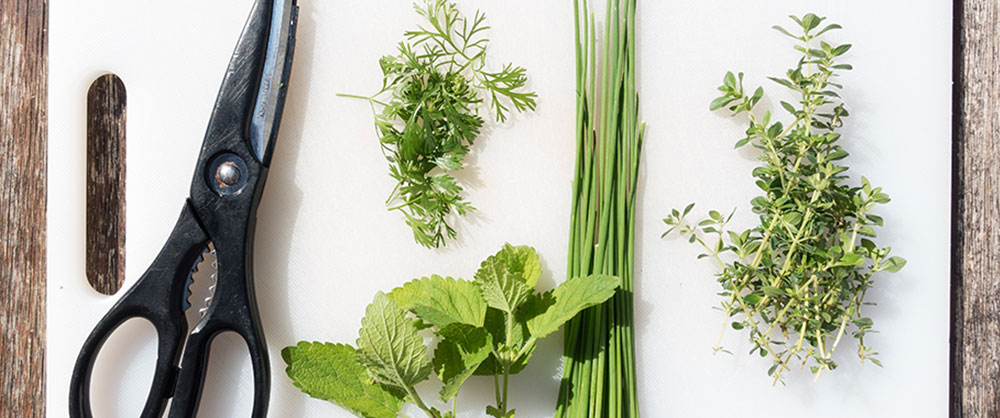 Scissors and herbs on a cutting board