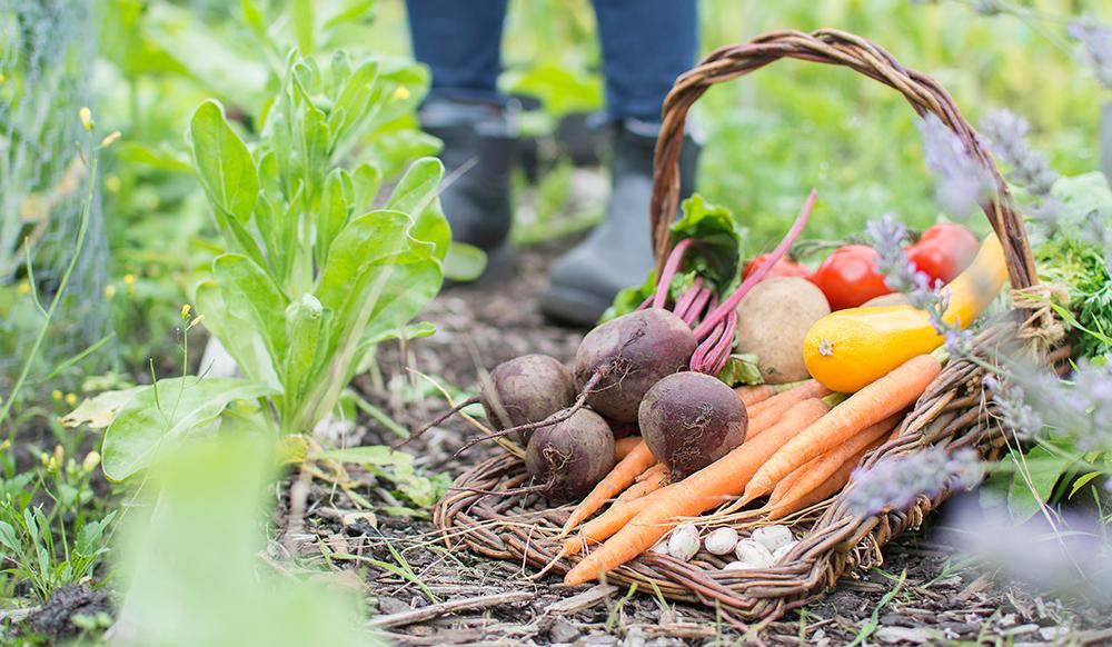 veggie gardening carrots beets tomatoes squash