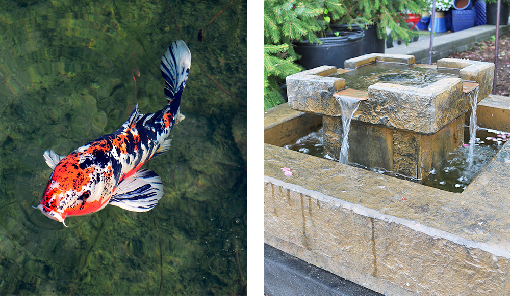 koi pond and water feature