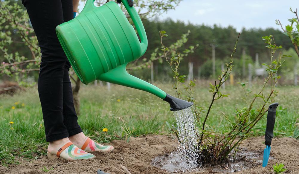 watering near the soil