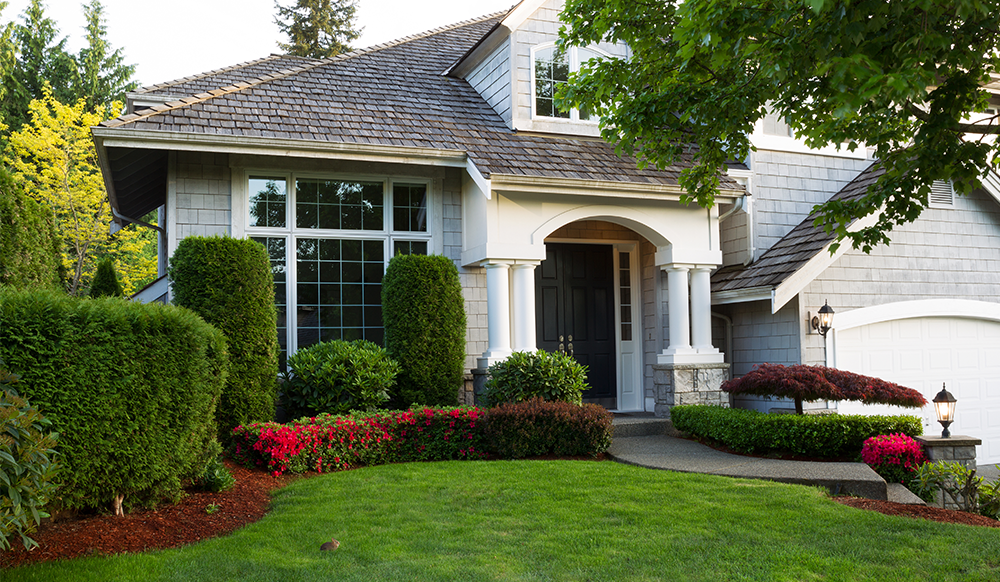 front yard landscape with trees