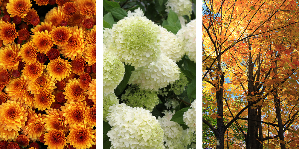 plants for fall colour