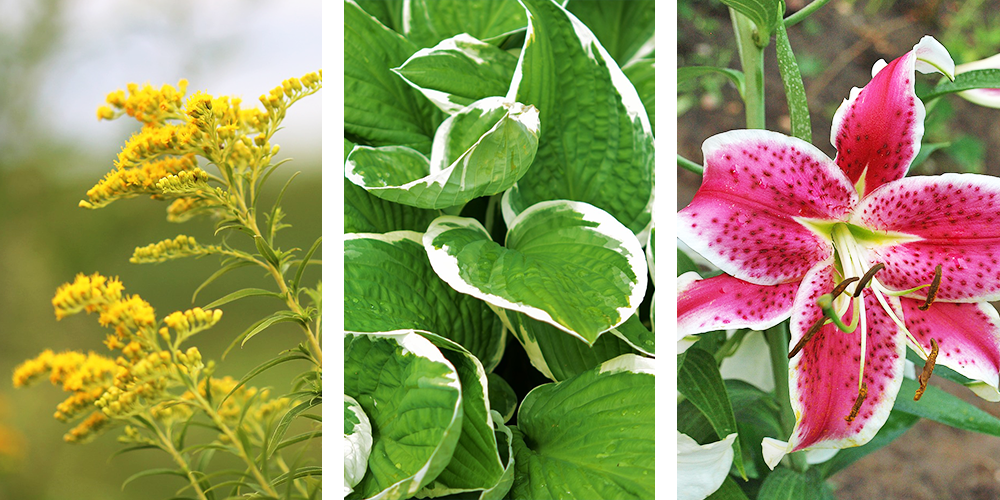 plants for late summer colour