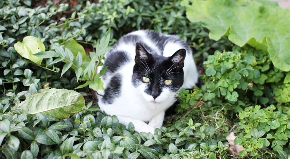 royal city nursery guelph cat garden repellent plants