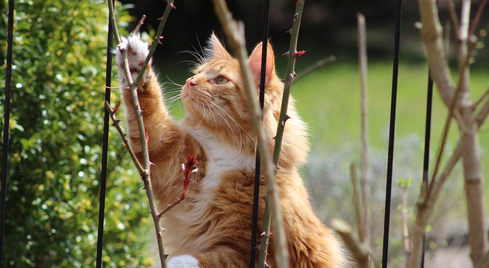 royal city nursery guelph cat garden destructive
