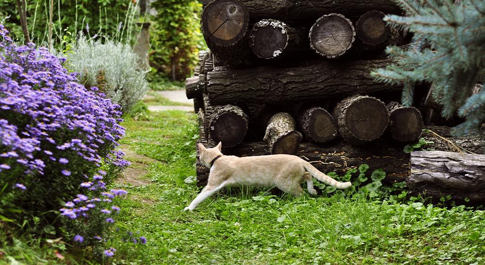 royal city nursery guelph cat garden keeping out