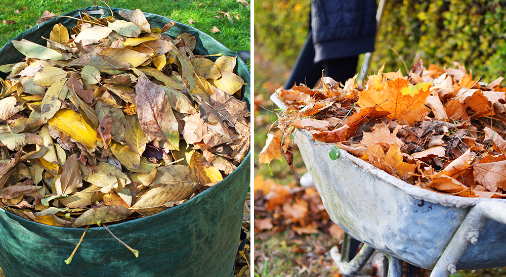 royal city nursery guelph fall lawn care guide leaf compost