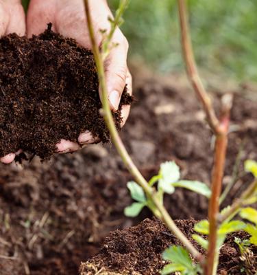 Soils and Amendments