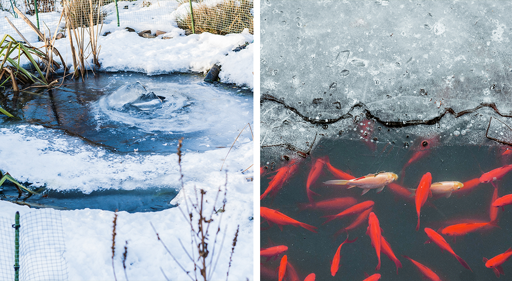 royal city nursery guelph 6 tips for winterizing your landscape pond