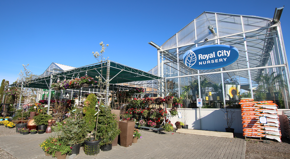 royal city nursery guelph ten lessons in ten years greenhouse