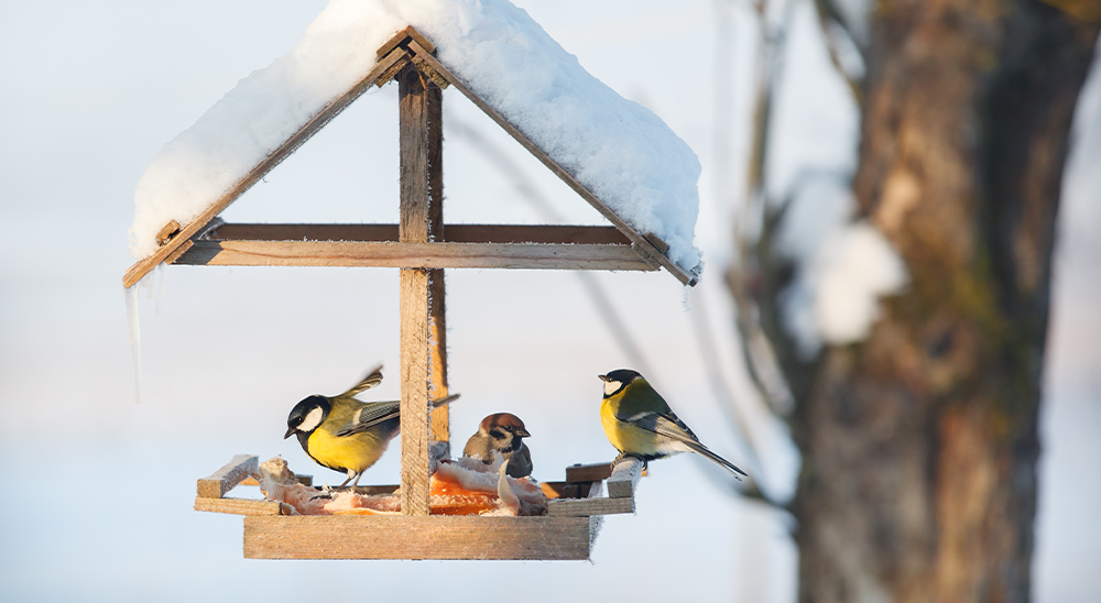 royal city nursery guelph how to attract winter birds feeding