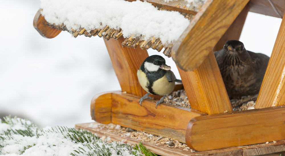 royal city nursery guelph how to attract winter birds houses